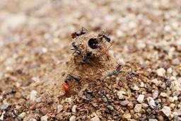 Entrée de fourmilière. Source : http://data.abuledu.org/URI/534b829c-entree-de-fourmiliere