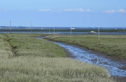 Estey à marée basse dans les prés salés. Source : http://data.abuledu.org/URI/55bbf8f9-estey-a-maree-basse-dans-les-pres-sales