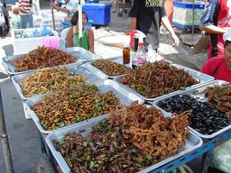 Étal d'insectes grillés en Thailande. Source : http://data.abuledu.org/URI/522cbd93-etal-d-insectes-grilles-en-thailande
