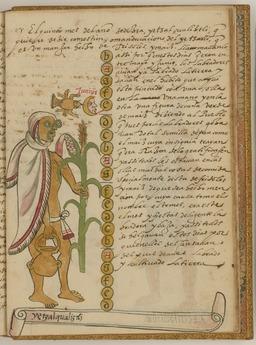 Etzalcualiztli, repas de maïs et de haricots le sixième mois du calendrier solaire aztèque. Source : http://data.abuledu.org/URI/5325d725-etzalcualiztli-repas-de-mais-et-de-haricots-le-sixieme-mois-du-calendrier-solaire-azteque