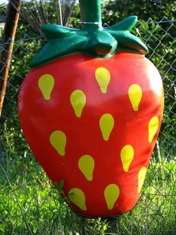 Fausse fraise dans un jardin. Source : http://data.abuledu.org/URI/534bb405-fausse-fraise-dans-un-jardin