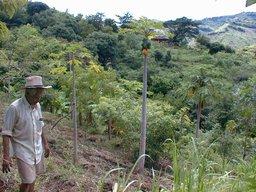 Ferme au Honduras. Source : http://data.abuledu.org/URI/503c848e-ferme-au-honduras