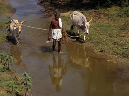 Fermier indien à Tamil Nadu en 1993. Source : http://data.abuledu.org/URI/564cdde4-fermier-indien-a-tamil-nadu-en-1993
