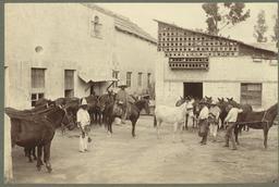 Ferrage des mules au Mexique. Source : http://data.abuledu.org/URI/517e38af-ferrage-des-mules-au-mexique