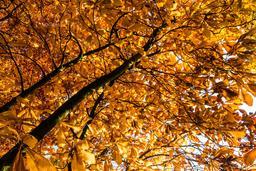 Feuillage d'automne. Source : http://data.abuledu.org/URI/5701543e-feuillage-d-automne