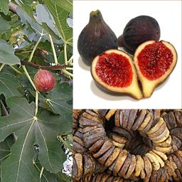 Figues. Source : http://data.abuledu.org/URI/50a64dca-figues
