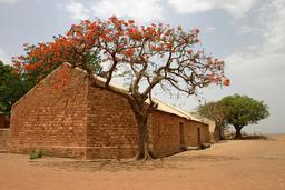 Flamboyant en fleurs au Mali. Source : http://data.abuledu.org/URI/52d2b668-flamboyant-en-fleurs-au-mali
