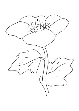 Fleur. Source : http://data.abuledu.org/URI/50264463-fleur