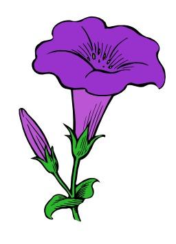 Fleur gamopétale. Source : http://data.abuledu.org/URI/5102cc03-fleur-gamopetale