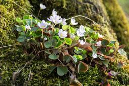 Fleurs de printemps. Source : http://data.abuledu.org/URI/56864d2f-fleurs-de-printemps