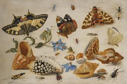Fleurs, papillons, coquillages et insectes. Source : http://data.abuledu.org/URI/54d1482a-fleurs-papillons-coquillages-et-insectes