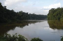 Fleuve Mana en Guyane. Source : http://data.abuledu.org/URI/5277788a-fleuve-mana-en-guyane
