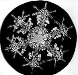 Flocon de neige de Bentley 8. Source : http://data.abuledu.org/URI/513e5de0-flocon-de-bentley-8