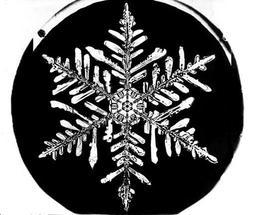 Flocon de neige de Bentley 13. Source : http://data.abuledu.org/URI/513e5fbf-flocon-de-neige-de-bentley-13