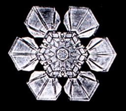Flocon de neige de Bentley 2. Source : http://data.abuledu.org/URI/513e64a4-flocon-de-neige-de-bentley-2