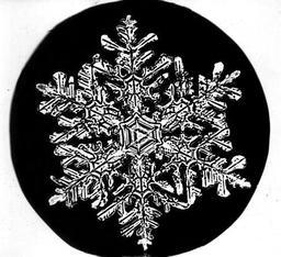 Flocon de neige de Bentley 3. Source : http://data.abuledu.org/URI/513e6348-flocon-de-neige-de-bentley-3