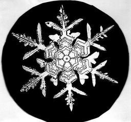 Flocon de neige de Bentley 4. Source : http://data.abuledu.org/URI/513e603c-flocon-de-neige-de-bentley-4