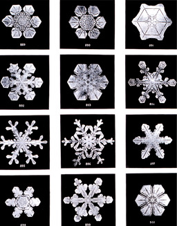Flocons de neige. Source : http://data.abuledu.org/URI/503236dc-flocons-de-neige