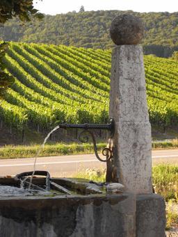 Fontaine-abreuvoir dans le vignoble jurassien. Source : http://data.abuledu.org/URI/5273ef85-fontaine-abreuvoir-dans-le-vignoble-jurassien