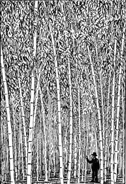 Forêt de bambous. Source : http://data.abuledu.org/URI/5102b0a5-foret-de-bambous
