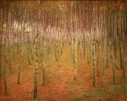 Forêt de bouleaux. Source : http://data.abuledu.org/URI/50983f69-foret-de-bouleaux