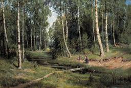 Forêt de bouleaux. Source : http://data.abuledu.org/URI/5138dc3a-foret-de-bouleaux