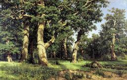 Forêt de chênes le soir. Source : http://data.abuledu.org/URI/5138dd97-foret-de-chenes-le-soir