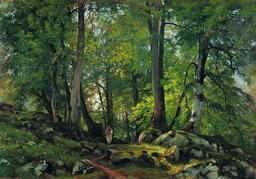 Forêt de hêtres en Suisse. Source : http://data.abuledu.org/URI/5139b6f9-foret-de-hetres-en-suisse