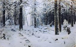 Forêt de pins en hiver. Source : http://data.abuledu.org/URI/5138d518-foret-de-pins-en-hiver