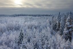 Forêt de sapins en hiver en Estonie. Source : http://data.abuledu.org/URI/5504b47c-foret-de-sapins-en-hiver-en-estonie