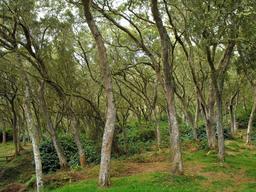 Forêt de tamarins des hauts dans un parc national. Source : http://data.abuledu.org/URI/521faece-foret-de-tamarins-des-hauts-dans-un-parc-national
