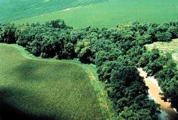 Forêt galerie. Source : http://data.abuledu.org/URI/513a313f-foret-galerie