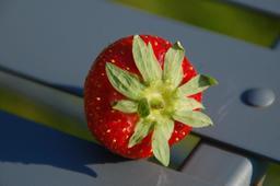Fraise. Source : http://data.abuledu.org/URI/59097d98-fraise