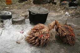 Fruits du palmier à huile. Source : http://data.abuledu.org/URI/54870346-fruits-du-palmier-a-huile