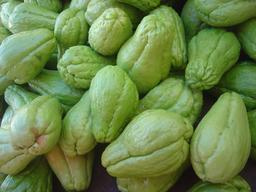 Fruits mûrs de chayote. Source : http://data.abuledu.org/URI/5433c64f-fruits-murs-de-chayote
