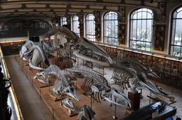 Galerie d'anatomie comparée. Source : http://data.abuledu.org/URI/541d96bb-galerie-d-anatomie-comparee