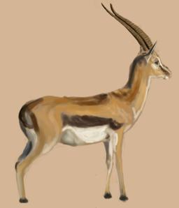Gazelle. Source : http://data.abuledu.org/URI/572b7b2e-gazelle