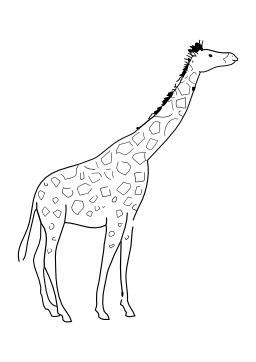 Girafe. Source : http://data.abuledu.org/URI/502654fa-girafe