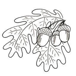 Glands suspendus dans un chêne. Source : http://data.abuledu.org/URI/52d73411-glands-suspendus-dans-un-chene