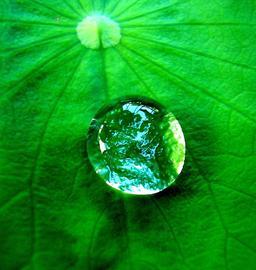 Goutte d'eau sur une feuille. Source : http://data.abuledu.org/URI/5042086d-goutte-d-eau-sur-une-feuille