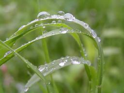 Gouttes de pluie sur l'herbe. Source : http://data.abuledu.org/URI/5232c5b5-gouttes-de-pluie-sur-l-herbe