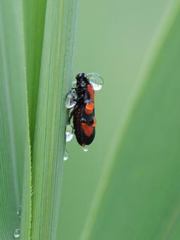Gouttes de rosée sur un insecte. Source : http://data.abuledu.org/URI/538af169-gouttes-de-rosee-sur-un-insecte