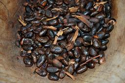 Graines de cacao grillées. Source : http://data.abuledu.org/URI/51987933-graines-de-cacao-grillees