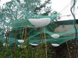 Grêlons dans un filet anti-grêle. Source : http://data.abuledu.org/URI/5879df1e-grelons-dans-un-filet-anti-grele