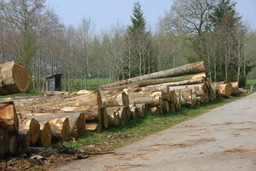 Grumes d'arbres. Source : http://data.abuledu.org/URI/51a13362-grumes-d-arbres