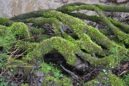 Habitat de castors dans les Ardennes. Source : http://data.abuledu.org/URI/53ac654a-habitat-de-castors-dans-les-ardennes