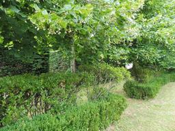 Haie dans le parc du Château Malleret à Cadaujac. Source : http://data.abuledu.org/URI/594eb3dc-haie-dans-le-parc-du-chateau-malleret-a-cadaujac