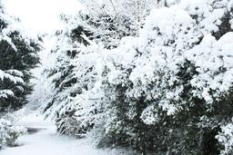 Haie sous la neige. Source : http://data.abuledu.org/URI/54d10130-haie-sous-la-neige