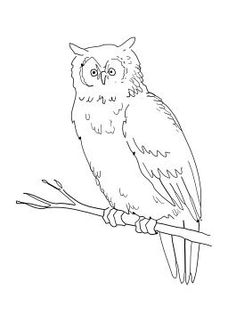 Hibou. Source : http://data.abuledu.org/URI/5026b778-hibou