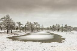 Hiver en Estonie. Source : http://data.abuledu.org/URI/551363f0-hiver-en-estonie